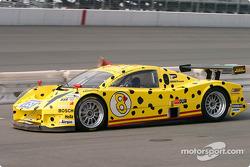 #8 G&W Motorsports BMW Picchio DP2