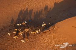 Wilderness in the desert
