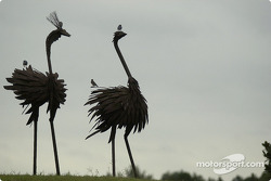 The ostriches at Barber Motorsports Park