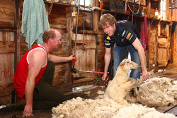 Sebastian Vettel, sheep shearing at a local farm, Red Bull Racing