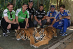 Nick Heidfeld, David Reynolds, Tim Blanchard, Marco Andretti, Mark Winterbottom, Will Power visit tigers at Dreamworld