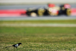 A bird and Davide Valsecchi, Lotus F1 E21 Third Driver