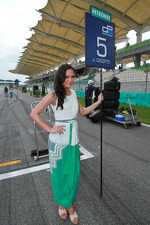Lovely grid girls