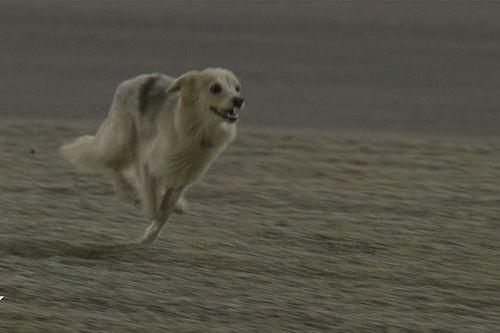 VÍDEO: Cachorro invade pista durante treino da F1 e diverte pilotos
