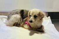 Szívmelengető: jó kezekben a pályára tévedt kutyus