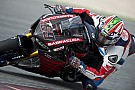 World Superbike Hayden endures