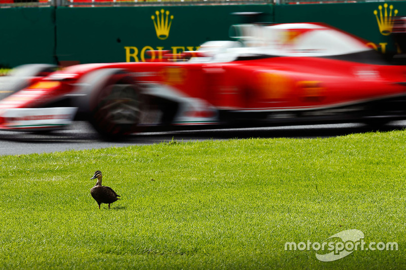 #9: Sebastian Vettel (Ferrari) lässt eine Ente links linken