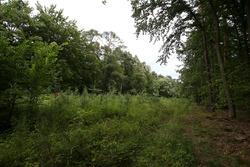 La ruta del viejo circuito ahora plantado con árboles