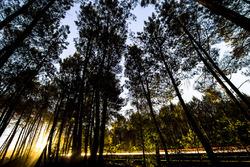 Éjszakai fények
