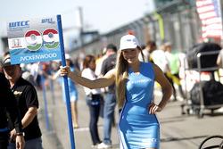 Grid girl of Daniel Nagy, Honda Team Zengo, Honday Civic WTCC