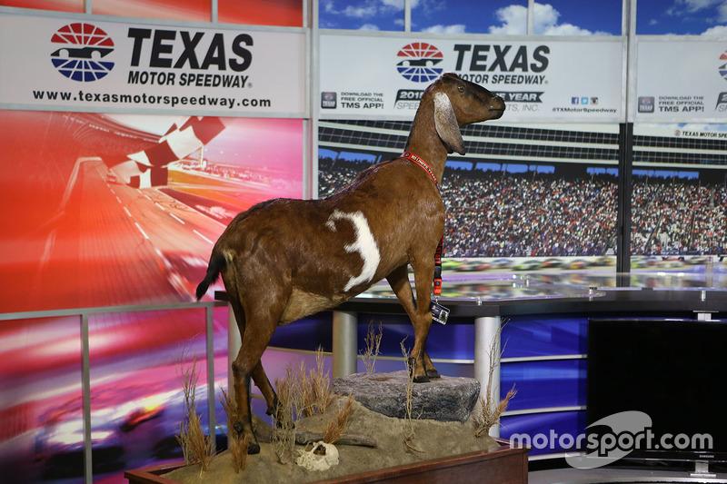 A stuffed goat presented by Texas Motor Speedway president Eddie Gossage