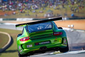 ALMS Blog The problem with green hornets