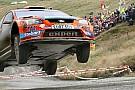 WRC - Red Bull pilotu Sousa, Finlandiyalı bir izleyiciye çarptı