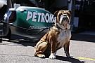 Schumacher, Hamilton, Räikkönen, Rosberg: az állatbolondok!