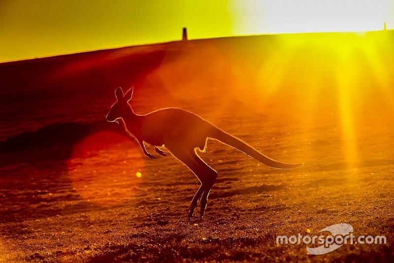 Кенгуру на трассе: гонке в Австралии (снова) помешала природа