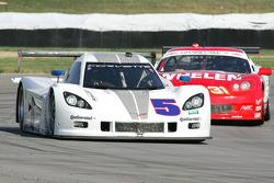 #5 Action Express Racing Corvette DP: Terry Borcheller, David Donohue