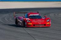 Corvette DP Chevrolet: Memo Gidley
