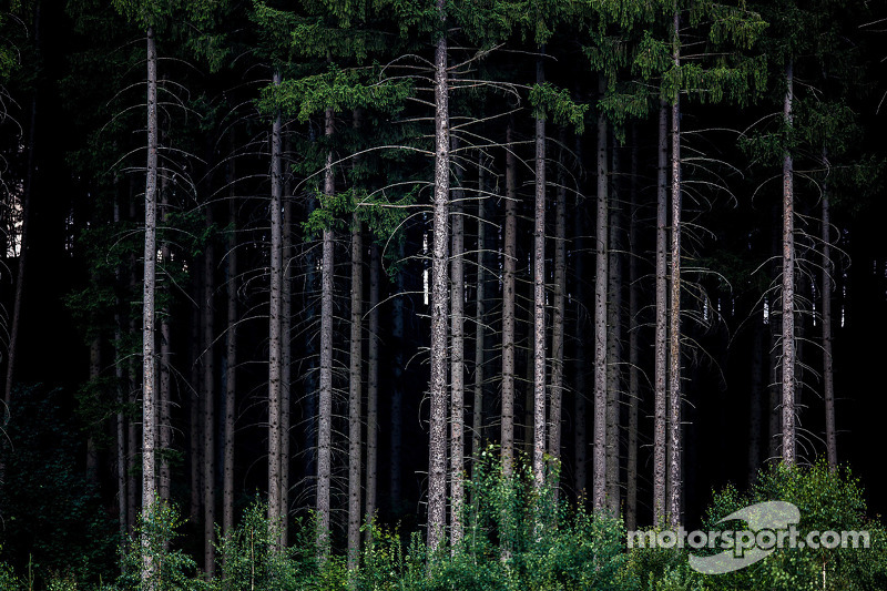 Klasik Red Bull Ring ağaçları