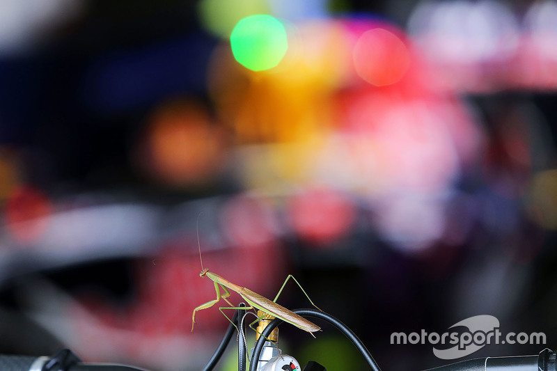 A Praying Mantis joins the Red Bull Racing in the pit garage