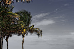 Visit of Miami South Beach
