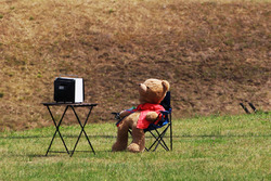 Плюшевий ведмідь дивиться телевізор